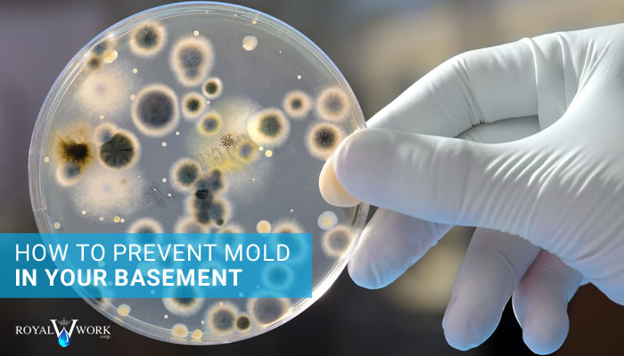 how to prevent mold in your basement in basement mold prevention