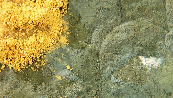 multicolored mold